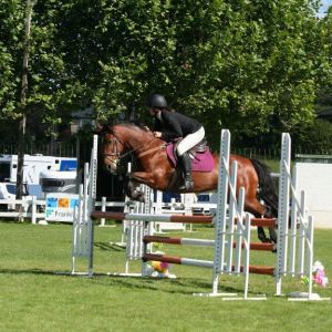Lovely Pony Club and Show Jumping Mare
