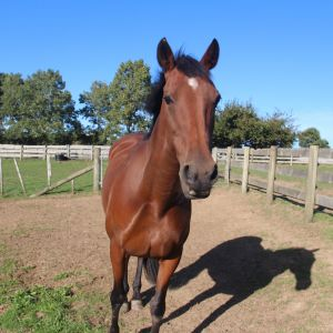 Horse for sale: Sweet paddockmate