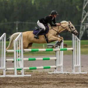 Talented SJ Pony