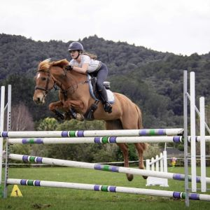 Horse for sale: Safe, competitive all-rounder