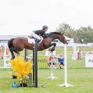 Horse for sale: Fun show jumping pony