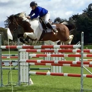 Highly Competitive Mini Prix Pony