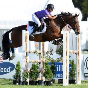 Horse for sale: Eye catching & fun Mini Prix Pony