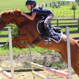Stunning pony with untapped potential