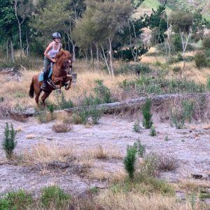 **** I need to start my pony career****