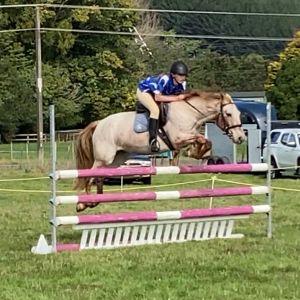 Zoomy Pony