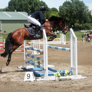 Competitive Showjumping Pony