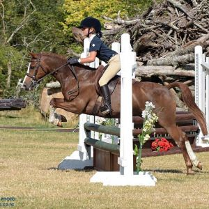 Quality and Competitive Kid's Pony