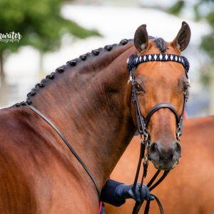 Fabulous Competitive Pony