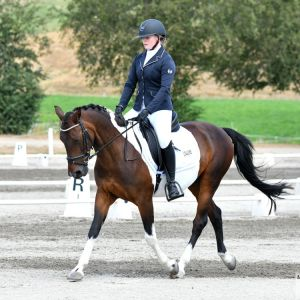 Beautiful Dressage and All Rounder Pony