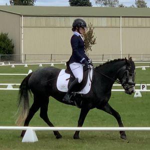 Talented dressage / all round pony