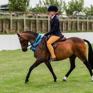 Perfect 12.2 All-Round Pony