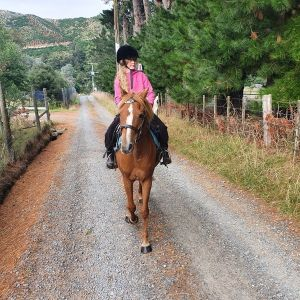 13hh Mother's dream - Pony Club all rounder,  safe pony.