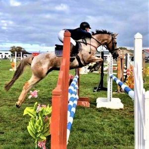 Horse for sale: WONDERFUL JUMPING PONY