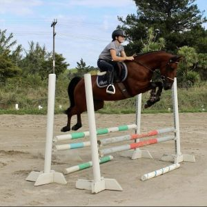 Horse for sale: One of a kind, talented young pony