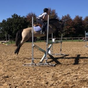 Neat Little Jumper/ Show Hunter Pony