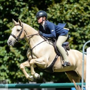 Horse for sale: Fun jumping pony!