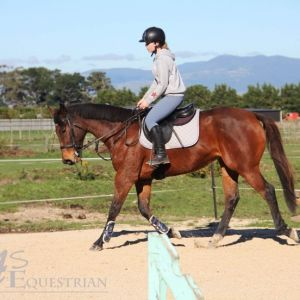 Horse for sale: sweet mare