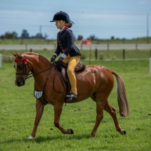 Horse for sale: OUTSTANDING LEAD REIN AND FIRST RIDDEN SHOW PONY