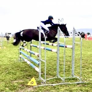 Talented, fun, competitive pony