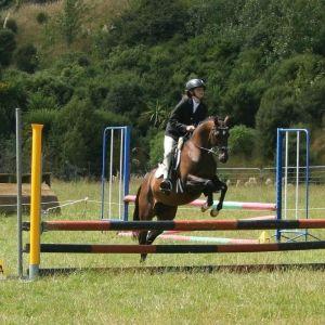 Gorgeous Riding Pony