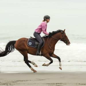 ULTIMATE ALL ROUNDER PONY