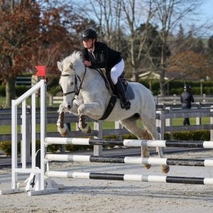 Horse for sale: Super Fun Young Pony