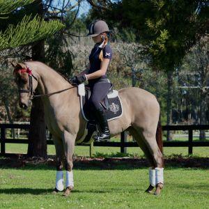 Gorgeous 12.2 Show Pony